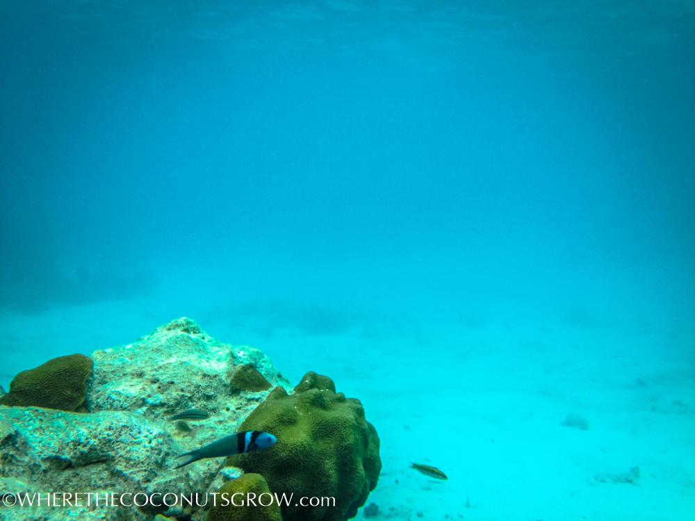 vg snorkeling-13
