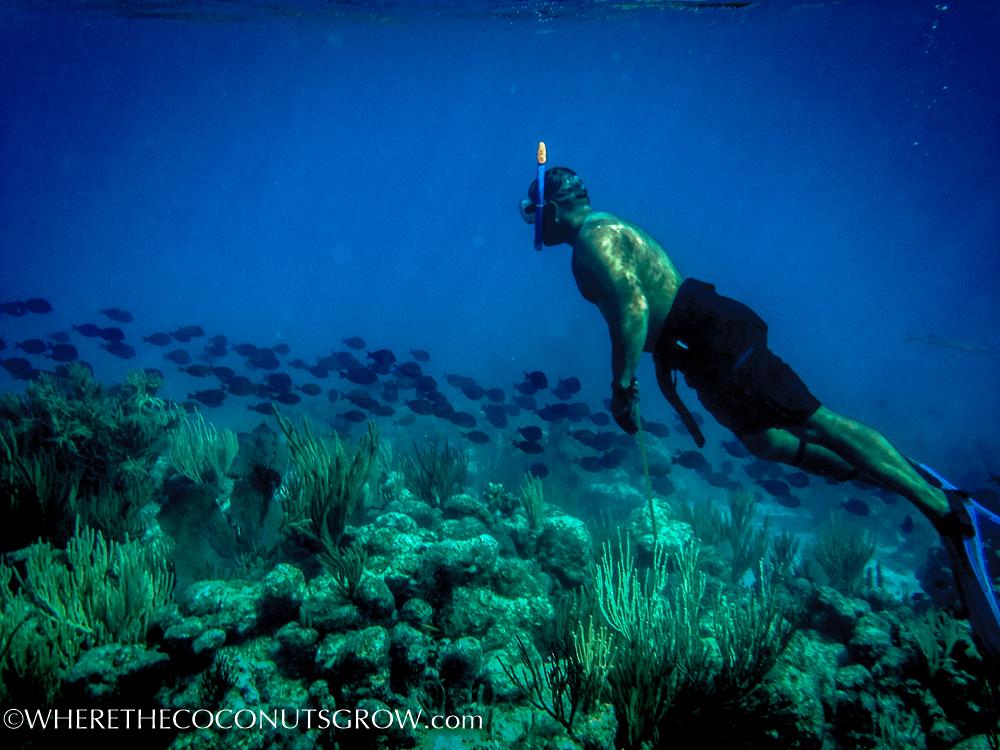vg snorkeling-8