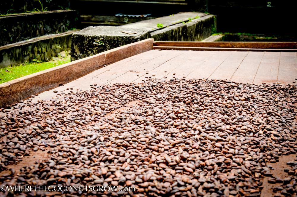 belmont cocoa-12