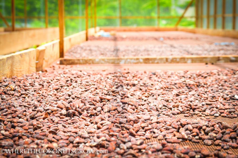 belmont cocoa-22