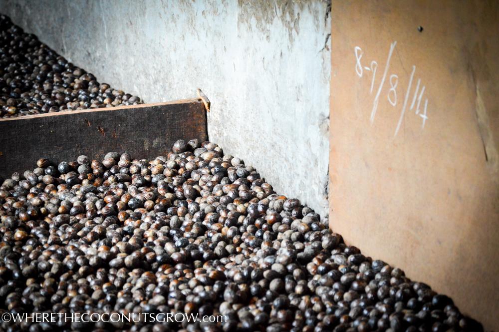 belmont cocoa-30