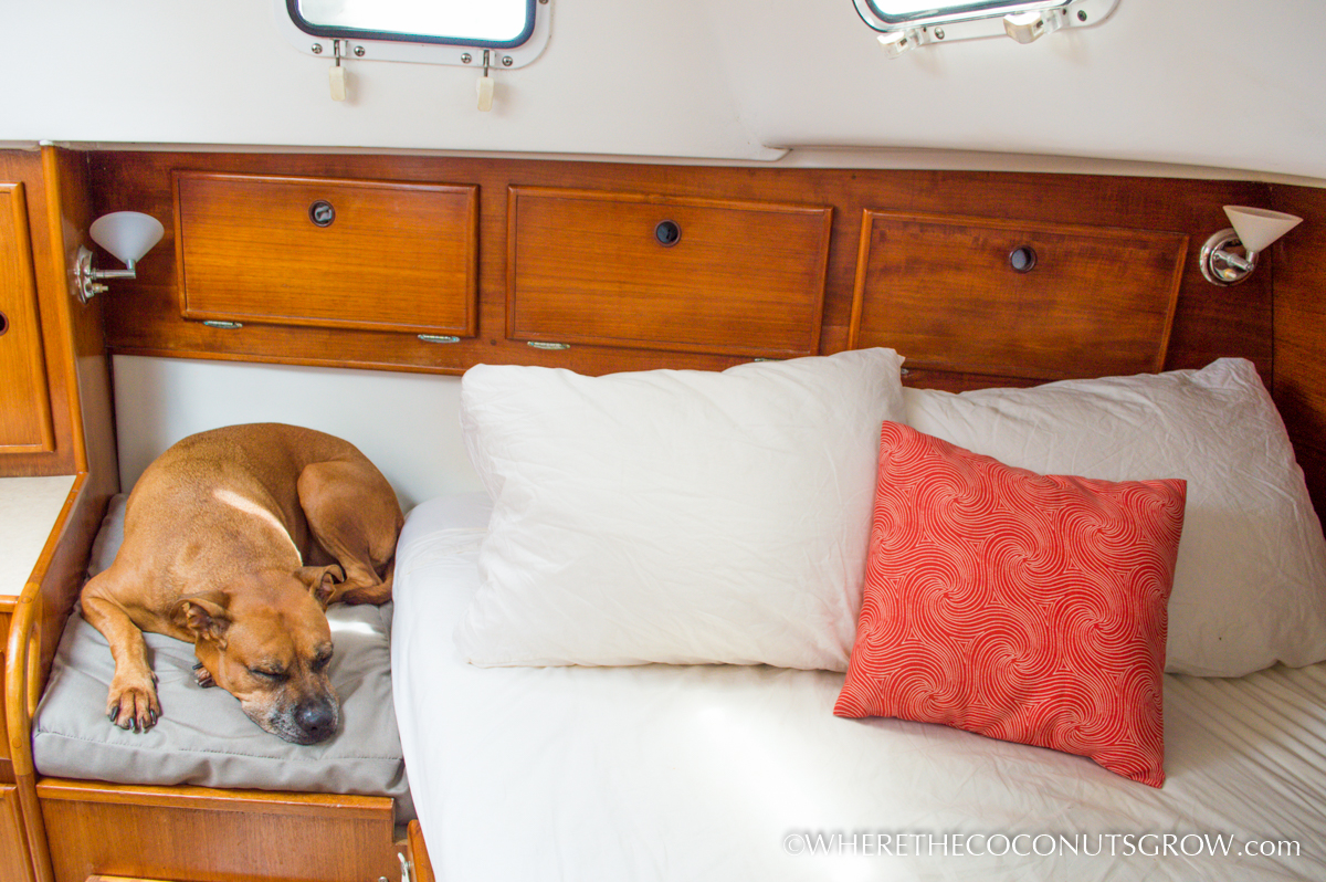 diy custom shaped dog bed | where the coconuts grow