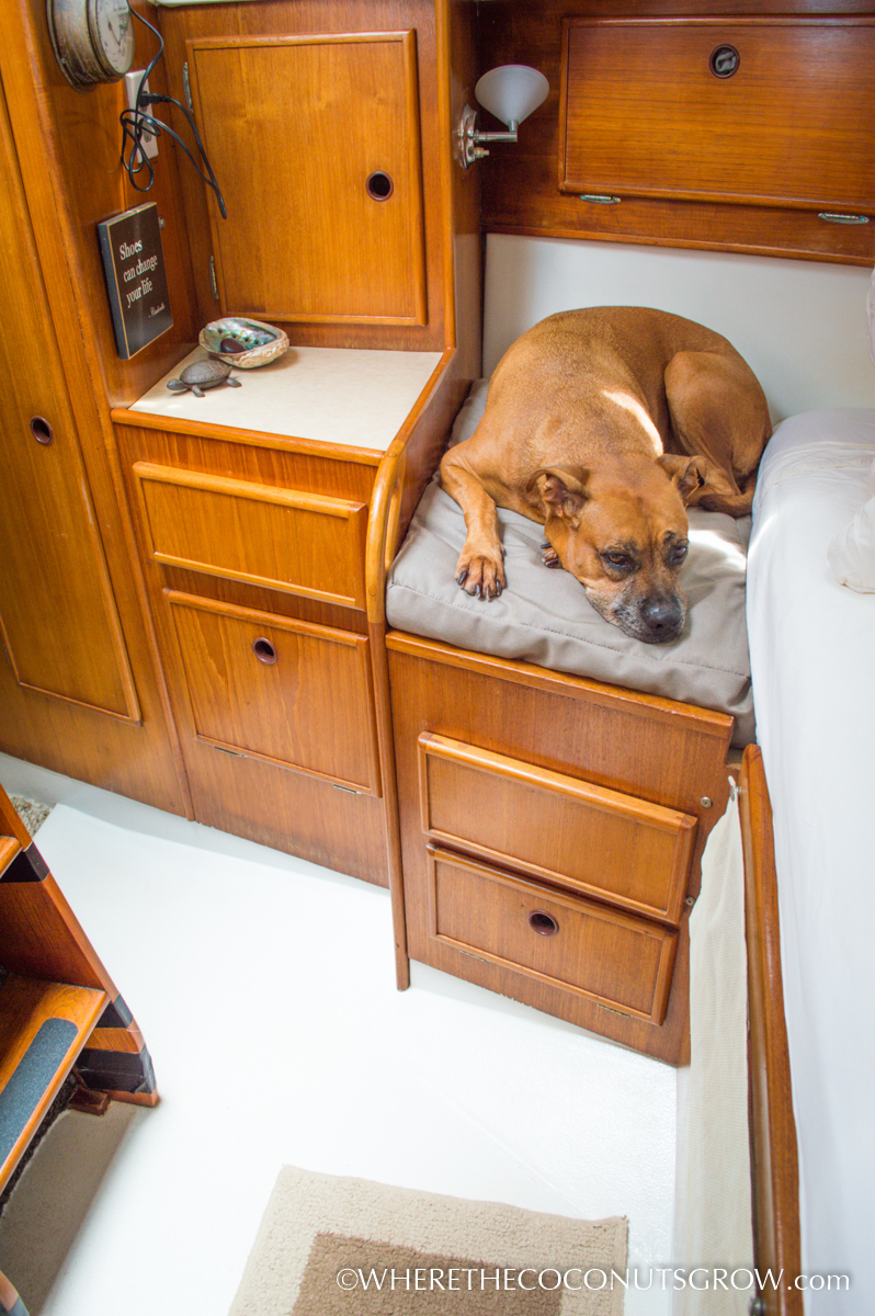Diy Custom Shaped Dog Bed Where The Coconuts Grow