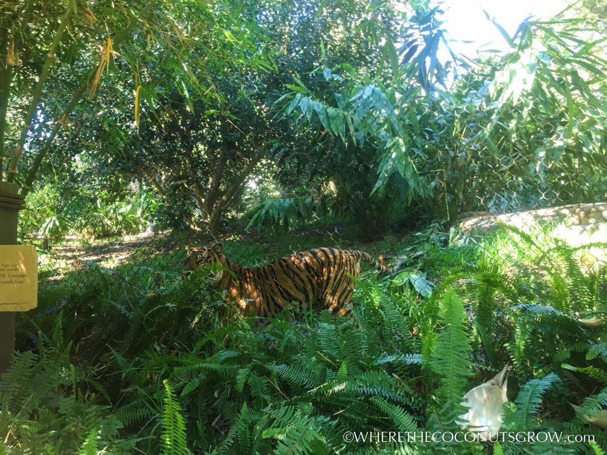 wild-animal-park-30