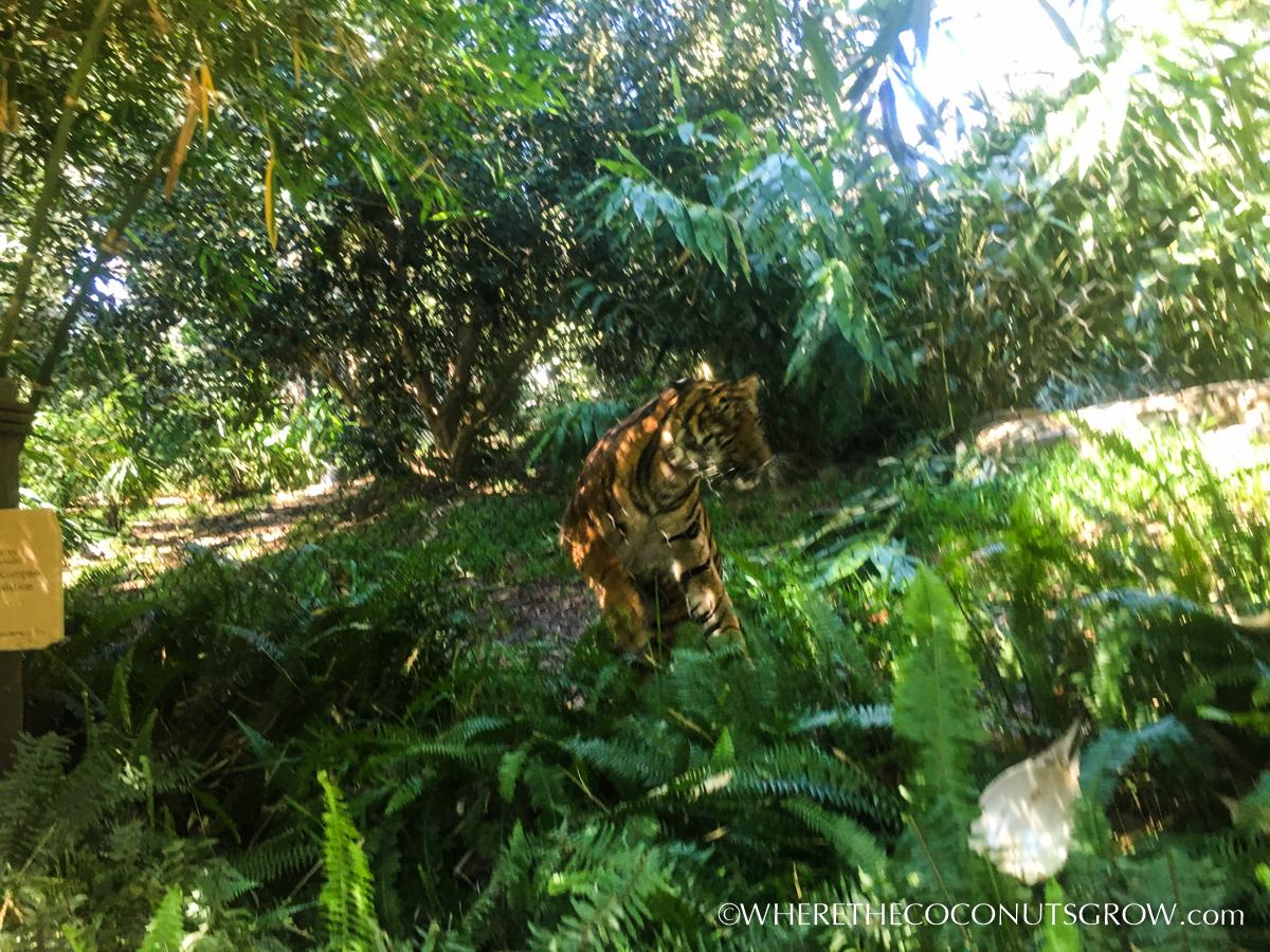 wild-animal-park-31