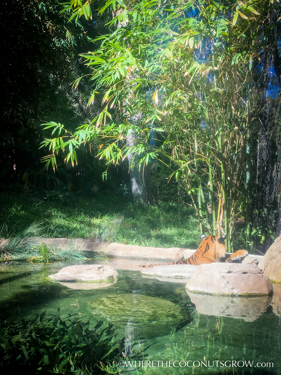 wild-animal-park-33