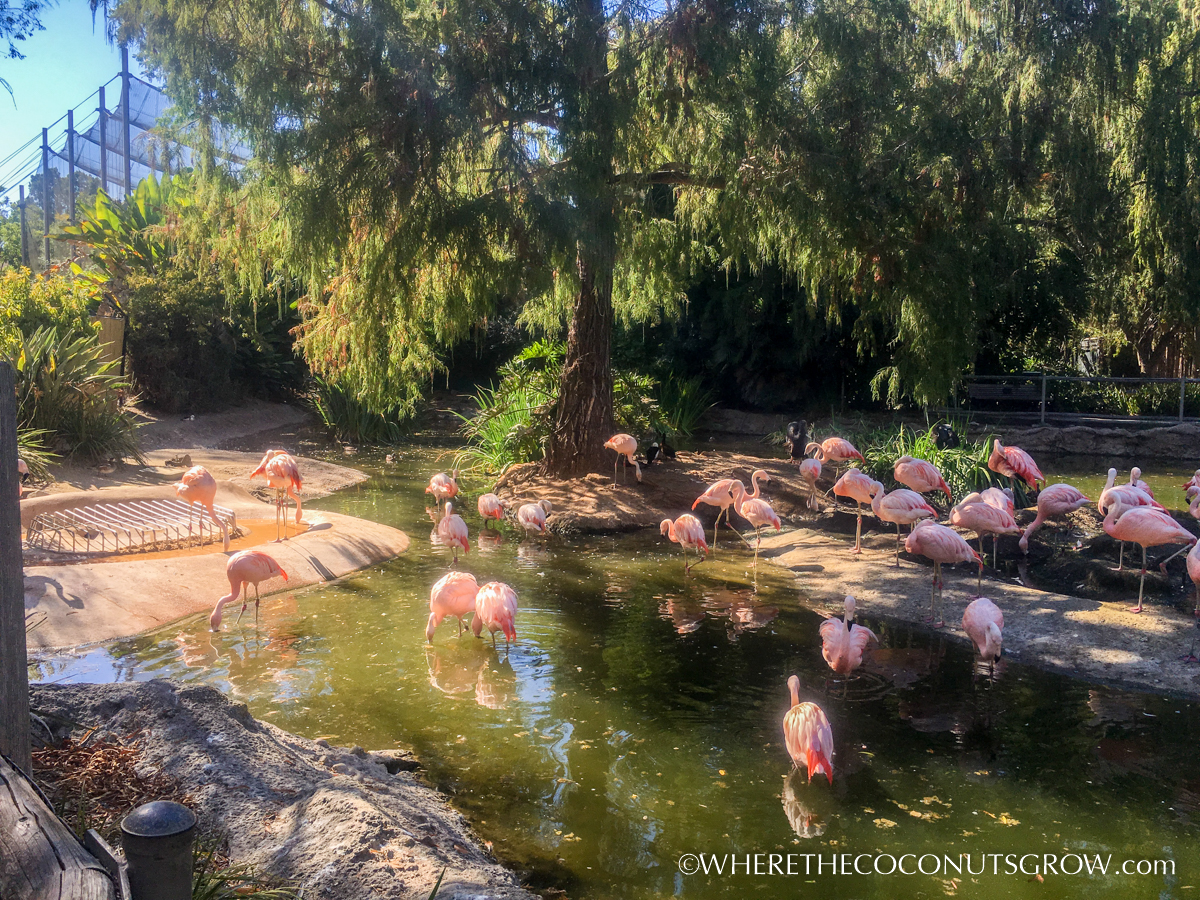 wild-animal-park-37