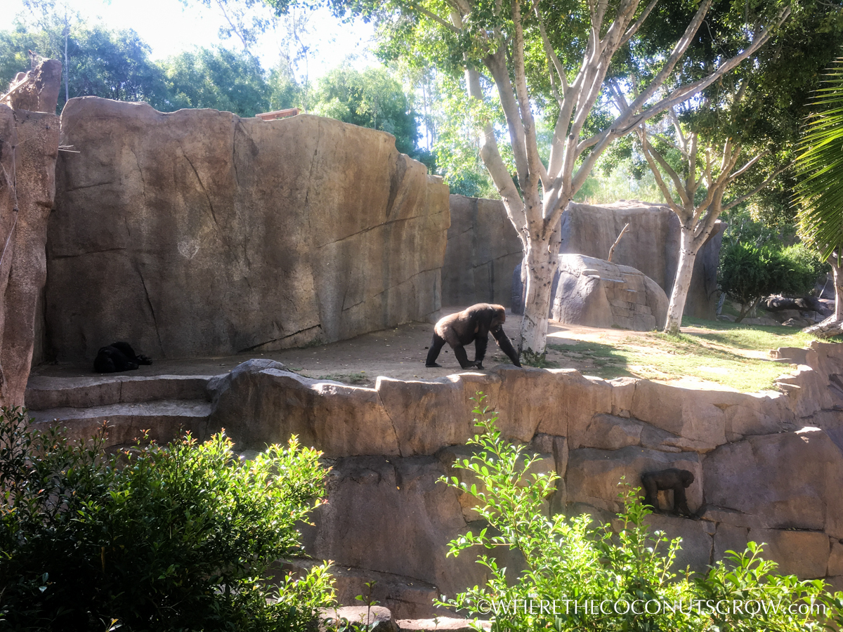 wild-animal-park-39